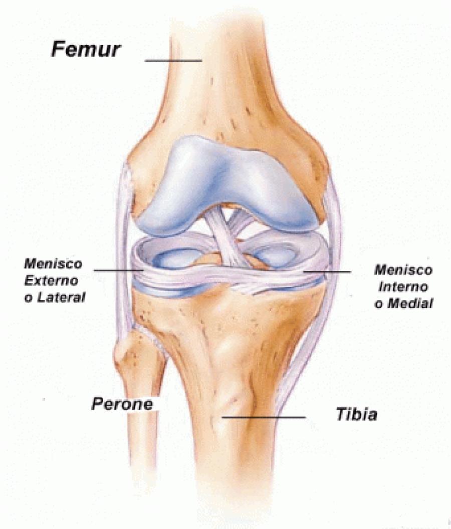 Anatomía del Menisco - Dr. Ignacio Dallo